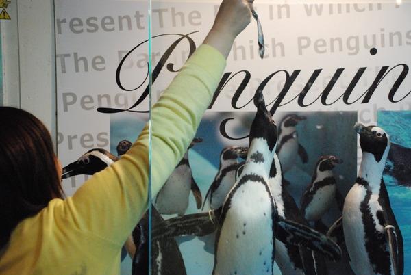 ペンギンのいるBAR (16)