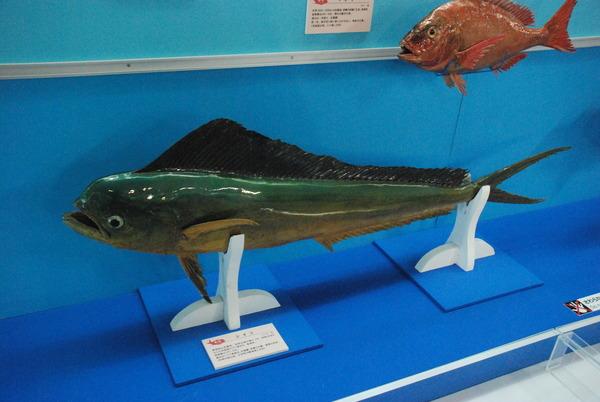 海の文化館 (5)