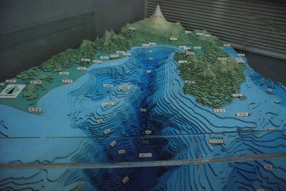 東海大海洋生物博物館 (18)