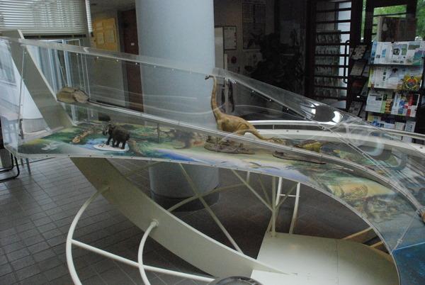 カブトガニ博物館 (12)