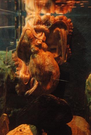 新屋島水族館 (41)