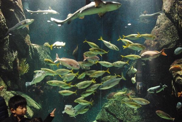 加茂水族館 (3)
