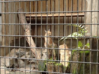 羽村動物園 (138)