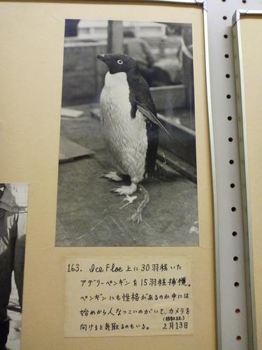 東京海洋大学 水産資料館 (53)