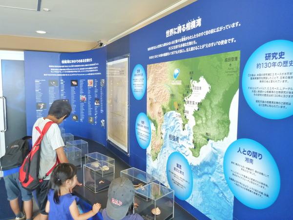 江ノ島水族館 (3)