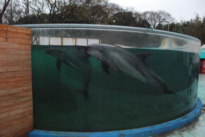新屋島水族館 (46)