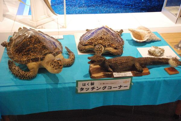 日本一の魚の剥製水族館 (7)