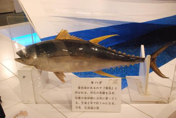 日本一の魚の剥製水族館 (9)