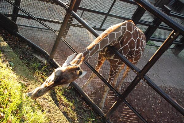 野毛山動物園 (19)