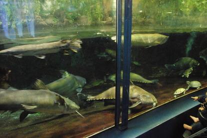新屋島水族館 (16)