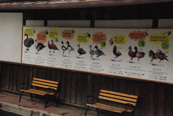 掛川花鳥園 (22)