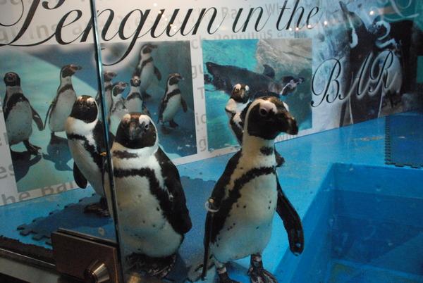 ペンギンのいるBAR (7)