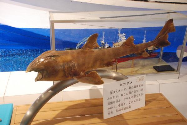 日本一の魚の剥製水族館 (8)
