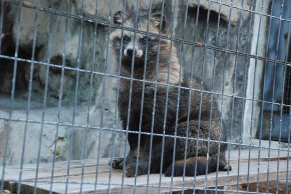 野毛山動物園 (14)