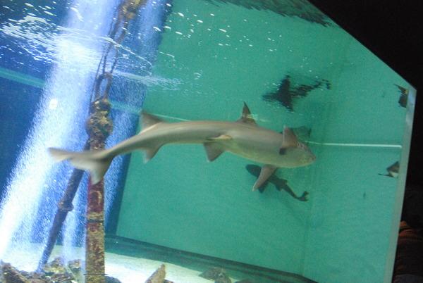 新屋島水族館 (18)