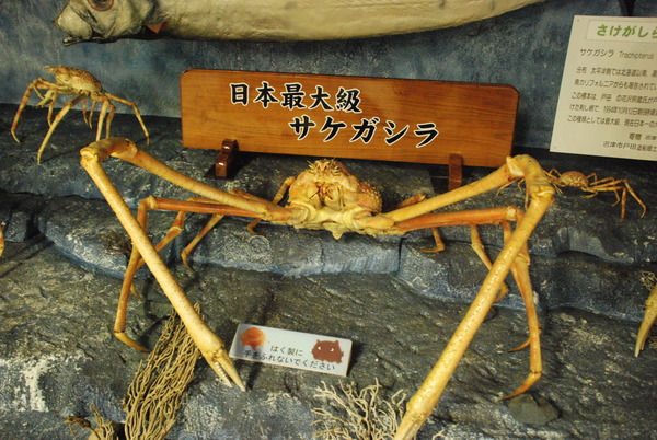 戸田造船資料館 (8)