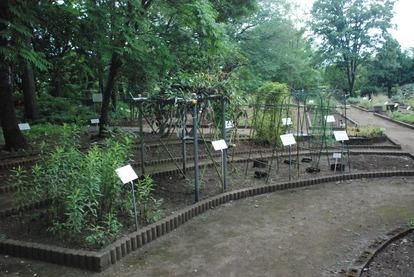 東京都薬用植物園 (17)