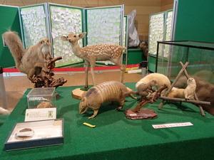 羽村動物園 (133)