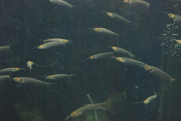 新屋島水族館 (35)
