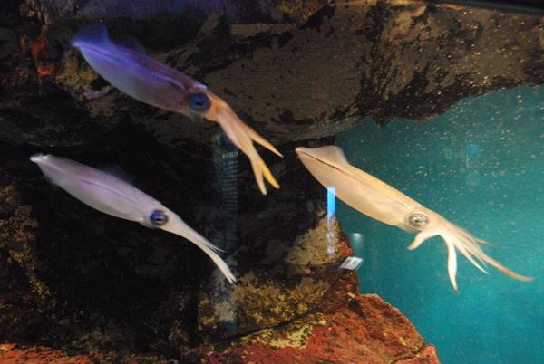 鹿児島水族館 (15)