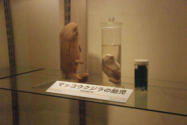 くじら博物館 (40)