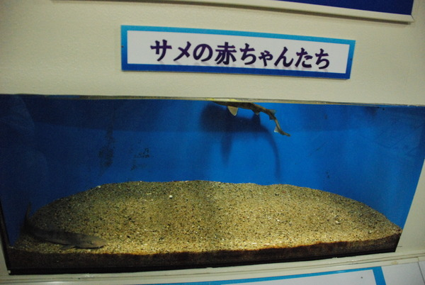 京急油壺マリンパーク (64)