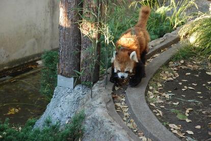 野毛山動物園 (3)