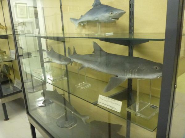 東京海洋大学 水産資料館 (72)