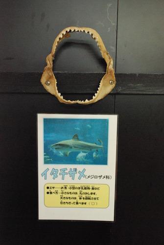 桂浜水族館 (59)