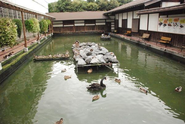 掛川花鳥園 (21)