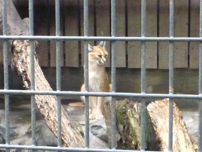 羽村動物園 (31)