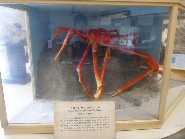 東京海洋大学 水産資料館 (7)
