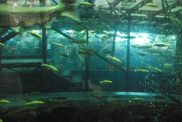 山梨県立富士湧水の里水族館 (11)