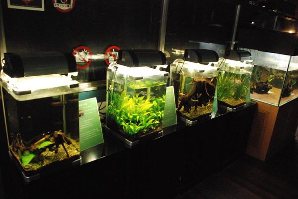 山梨県立富士湧水の里水族館 (24)