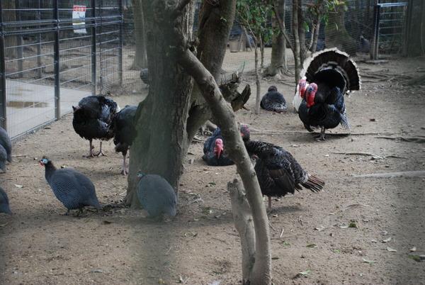 久留米鳥類センター (11)