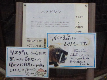 平塚市ふれあい動物園 (4)