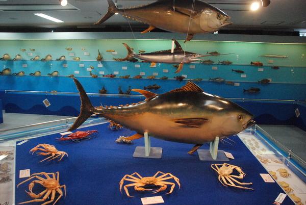海の文化館 (9)