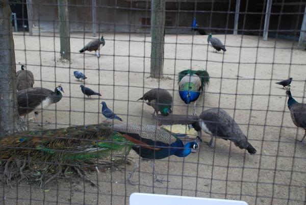 久留米鳥類センター (24)