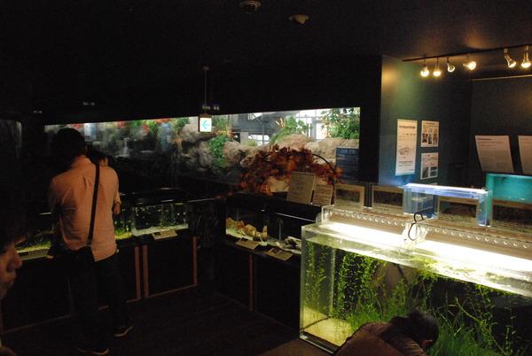 山梨県立富士湧水の里水族館 (4)