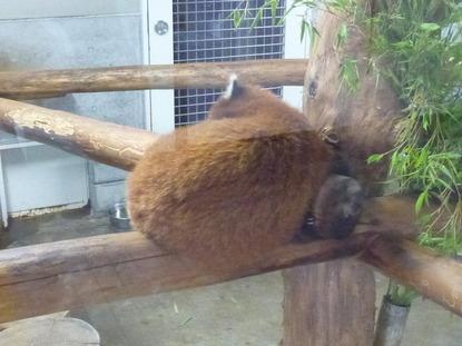 羽村動物園 (9)