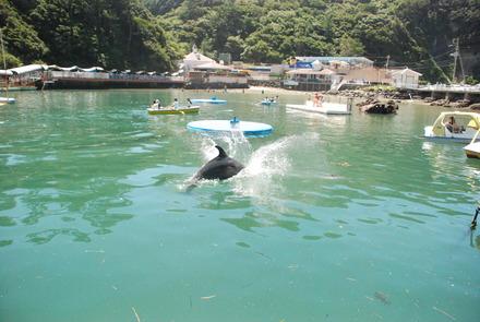 下田海中水族館 (18)