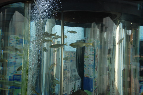 相模川ふれあい科学館 (2)