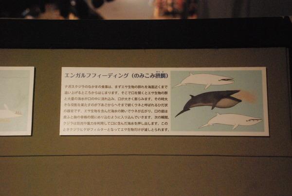 くじら博物館 (21)