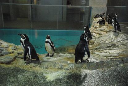 長崎ペンギン水族館 (23)