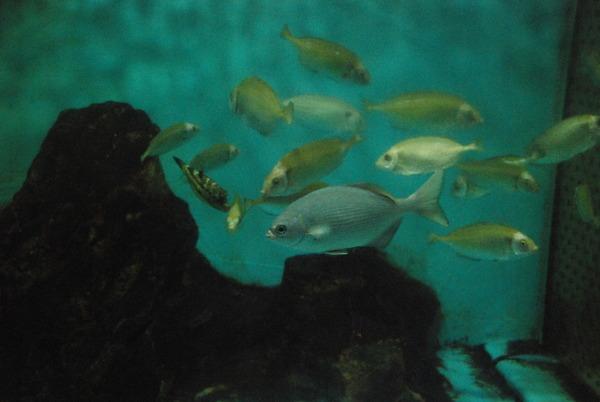 桂浜水族館 (40)
