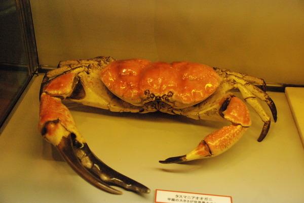 山梨県立富士湧水の里水族館 (31)