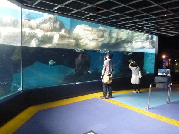 箱根園水族館 (11)