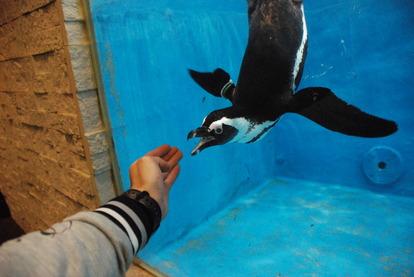 ペンギンのいるBAR (13)