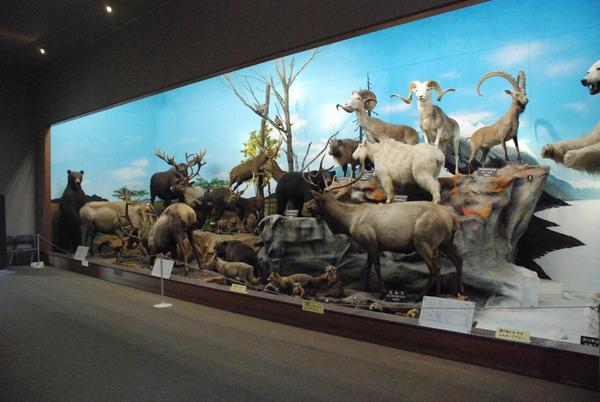滋賀サファリ博物館 (3)