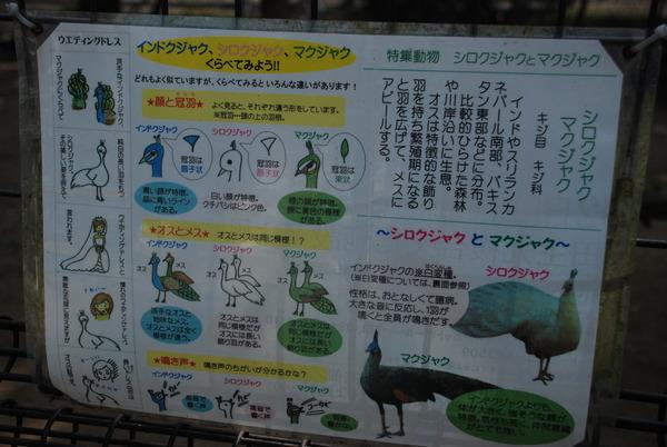 久留米鳥類センター (6)
